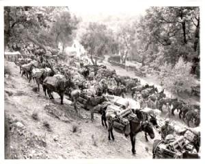 Haiti Mule Train