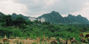 Razorback Quang Tri 001