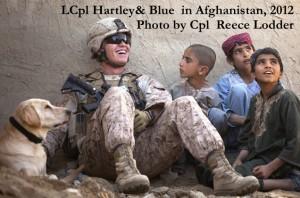 Hartley - Blue 001