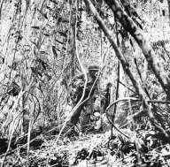 Guadalcanal 001